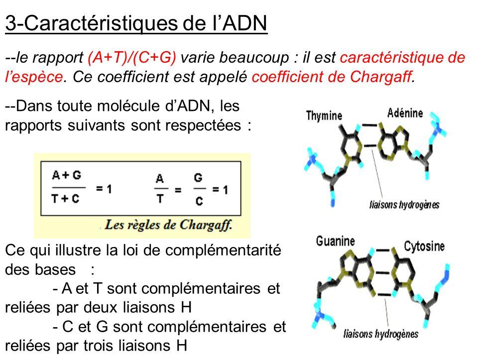 3-Caractéristiques de lADN --le rapport (A+T)/(C+G) varie beaucoup : il est caractéristique de lespèce. Ce coefficient est appelé coefficient de Charg
