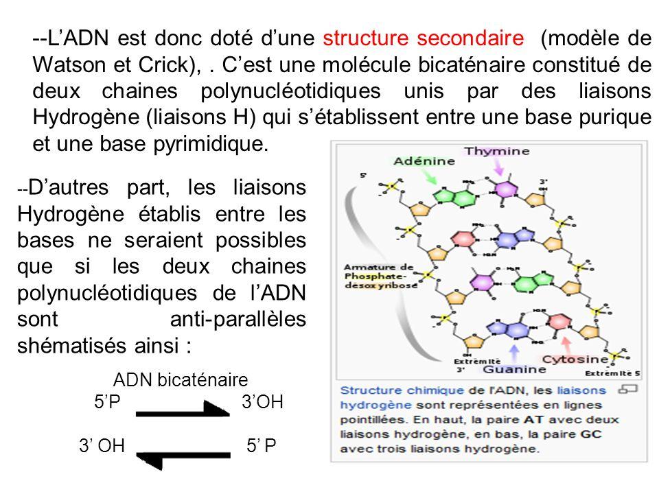 -- Dautres part, les liaisons Hydrogène établis entre les bases ne seraient possibles que si les deux chaines polynucléotidiques de lADN sont anti-par