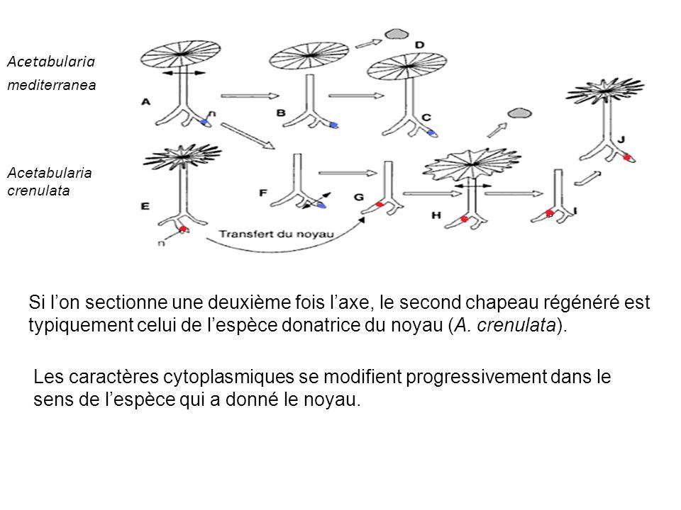 le noyau a une action spécifique, il contient une substane diffusible, porteuse de linformation génétique spécifique.