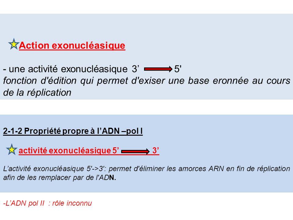 Cest lagent réparateur de lADN, elle possède Action exonucléasique - une activité exonucléasique 3 5' fonction d'édition qui permet d'exiser une base