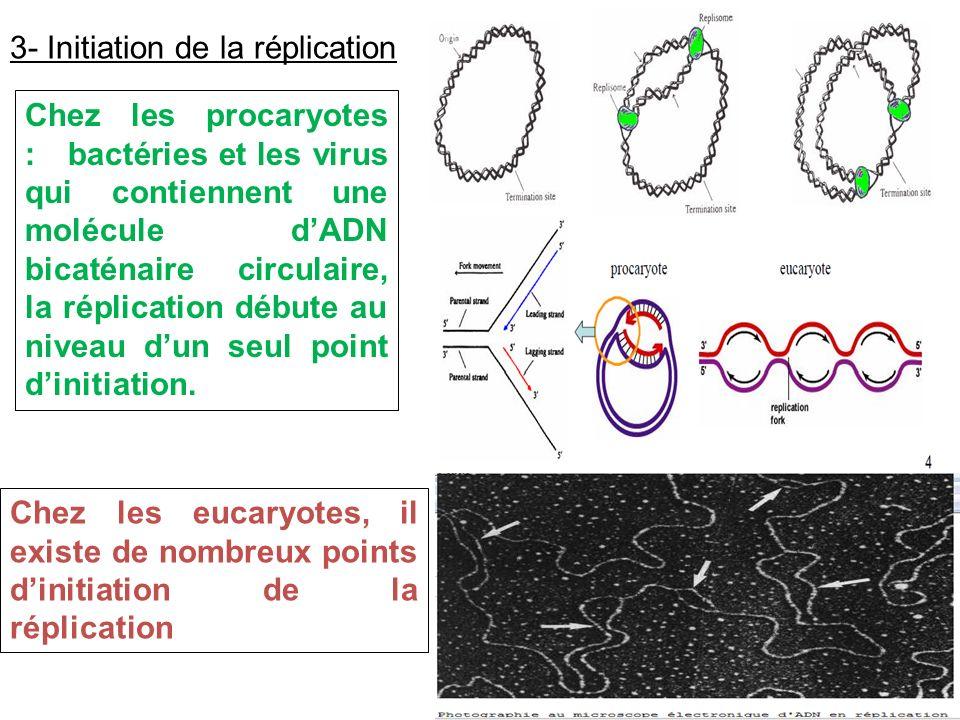 3- Initiation de la réplication Chez les procaryotes : bactéries et les virus qui contiennent une molécule dADN bicaténaire circulaire, la réplication