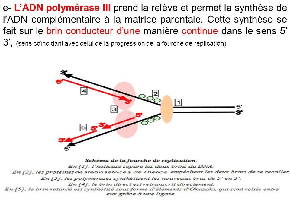 e- LADN polymérase III prend la relève et permet la synthèse de lADN complémentaire à la matrice parentale. Cette synthèse se fait sur le brin conduct