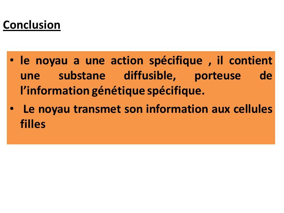 le noyau a une action spécifique, il contient une substane diffusible, porteuse de linformation génétique spécifique. Le noyau transmet son informatio