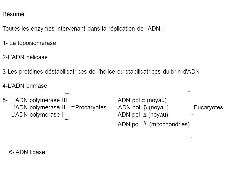 Résumé Toutes les enzymes intervenant dans la réplication de lADN : 1- La topoisomérase 2-LADN hélicase 3-Les protéines déstabilisatrices de lhélice o