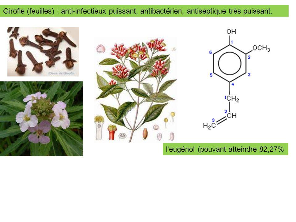 Girofle (feuilles) : anti-infectieux puissant, antibactérien, antiseptique très puissant. leugénol (pouvant atteindre 82,27%