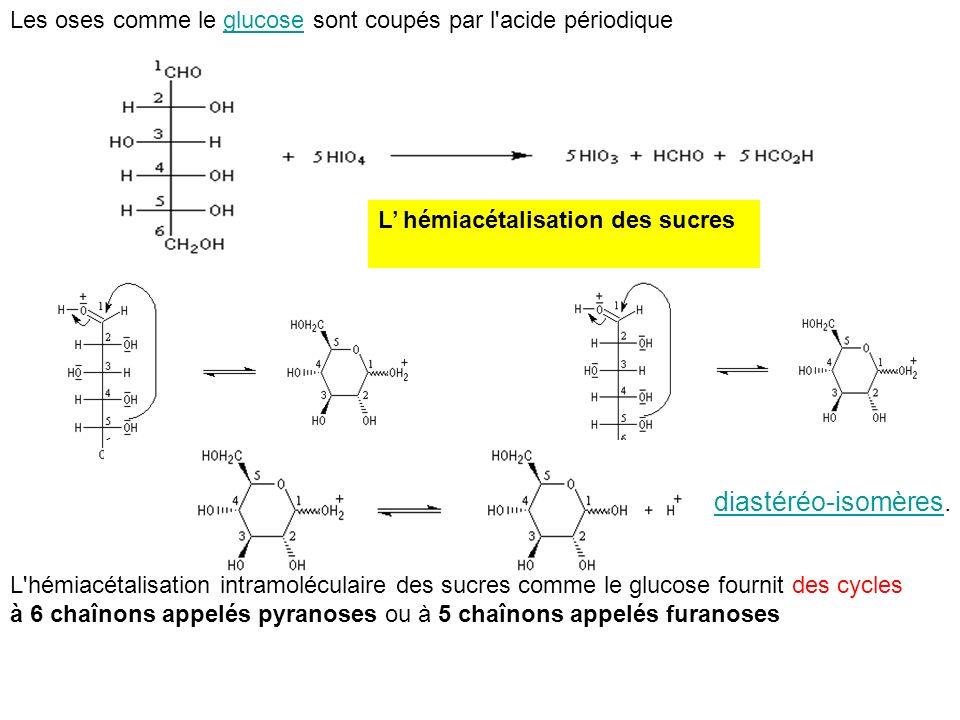 Les oses comme le glucose sont coupés par l'acide périodiqueglucose L hémiacétalisation des sucres L'hémiacétalisation intramoléculaire des sucres com