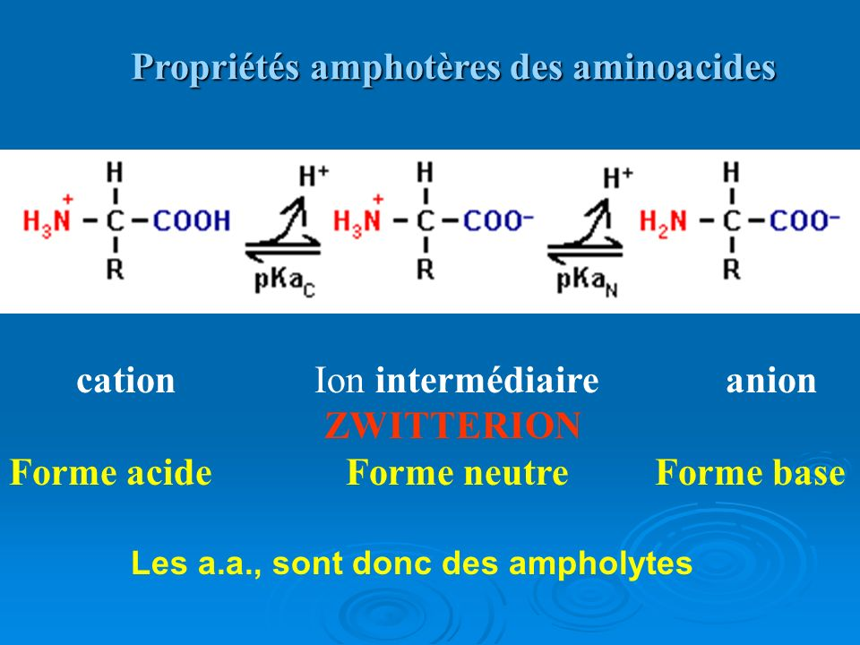 cation Ion intermédiaire anion ZWITTERION Forme acide Forme neutre Forme base Propriétés amphotères des aminoacides Les a.a., sont donc des ampholytes