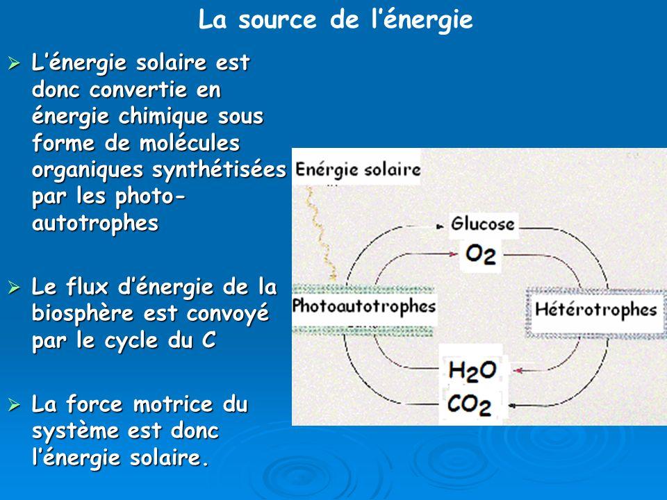 Lénergie solaire est donc convertie en énergie chimique sous forme de molécules organiques synthétisées par les photo- autotrophes Lénergie solaire es