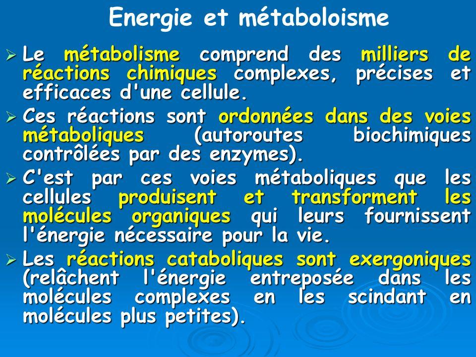 Le métabolisme comprend des milliers de réactions chimiques complexes, précises et efficaces d'une cellule. Le métabolisme comprend des milliers de ré