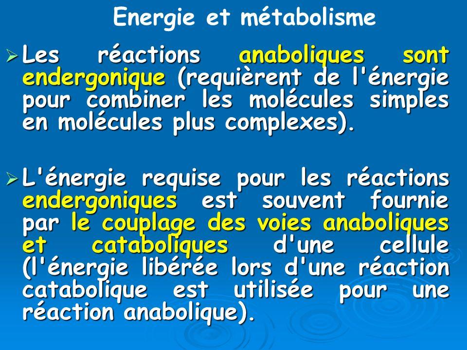 Les réactions anaboliques sont endergonique (requièrent de l'énergie pour combiner les molécules simples en molécules plus complexes). Les réactions a