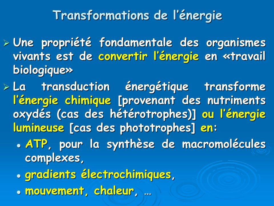 Transformations de lénergie Une propriété fondamentale des organismes vivants est de convertir lénergie en «travail biologique» Une propriété fondamen