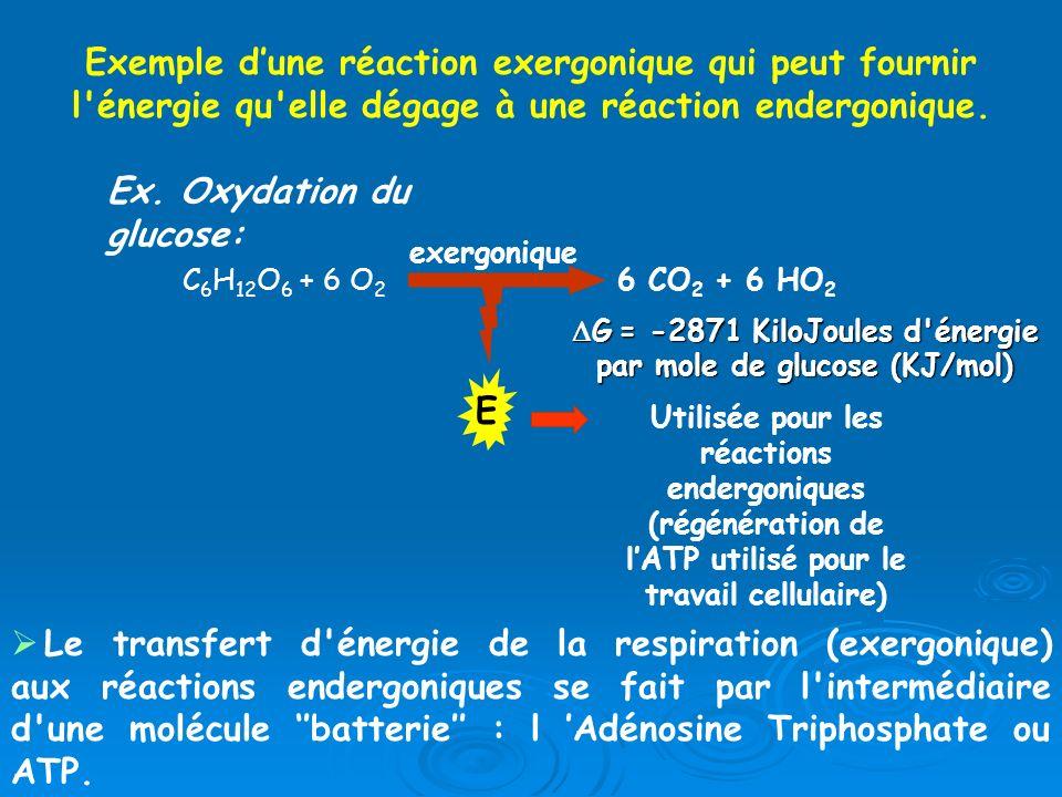 Exemple dune réaction exergonique qui peut fournir l'énergie qu'elle dégage à une réaction endergonique. Ex. Oxydation du glucose: C 6 H 12 O 6 + 6 O