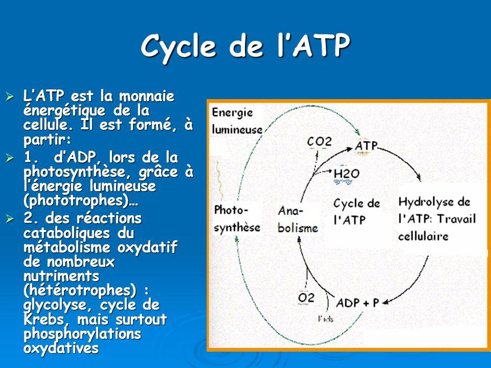 Cycle de lATP LATP est la monnaie énergétique de la cellule. Il est formé, à partir: LATP est la monnaie énergétique de la cellule. Il est formé, à pa