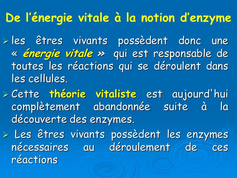 les êtres vivants possèdent donc une « énergie vitale » qui est responsable de toutes les réactions qui se déroulent dans les cellules. les êtres viva