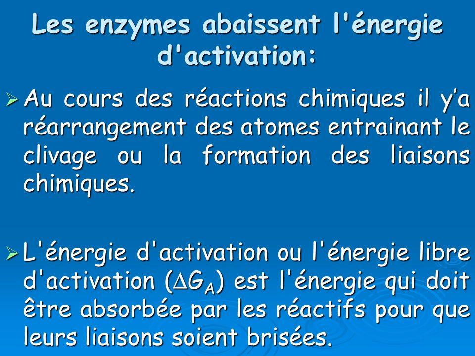 Les enzymes abaissent l'énergie d'activation: Au cours des réactions chimiques il ya réarrangement des atomes entrainant le clivage ou la formation de