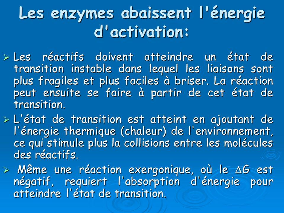 Les enzymes abaissent l'énergie d'activation: Les réactifs doivent atteindre un état de transition instable dans lequel les liaisons sont plus fragile
