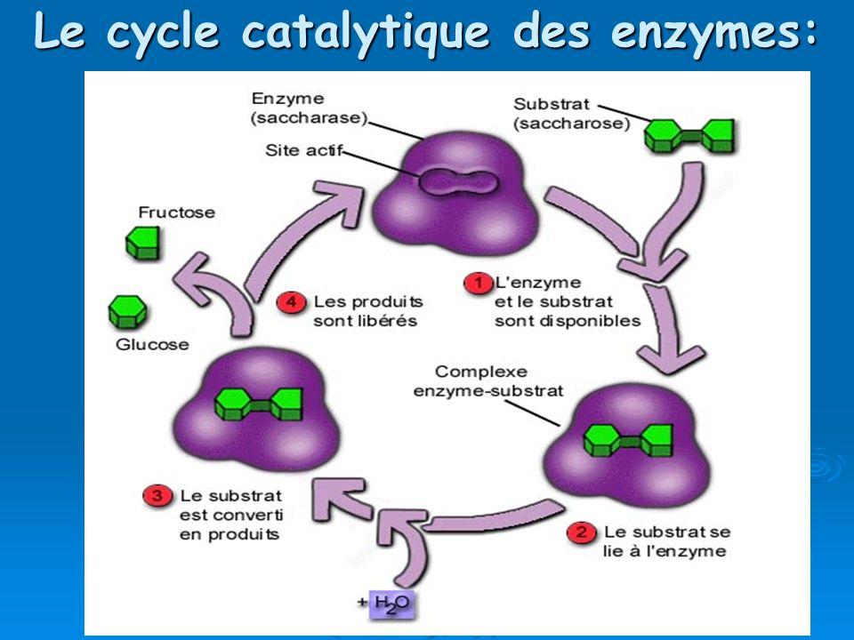 Le cycle catalytique des enzymes: