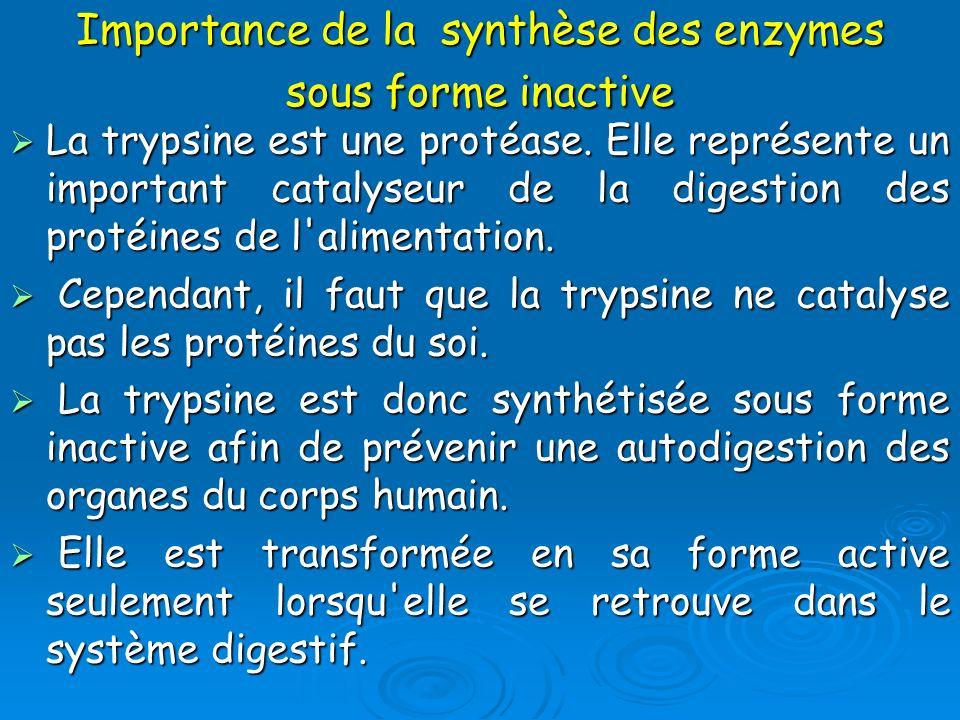 Importance de la synthèse des enzymes sous forme inactive La trypsine est une protéase. Elle représente un important catalyseur de la digestion des pr