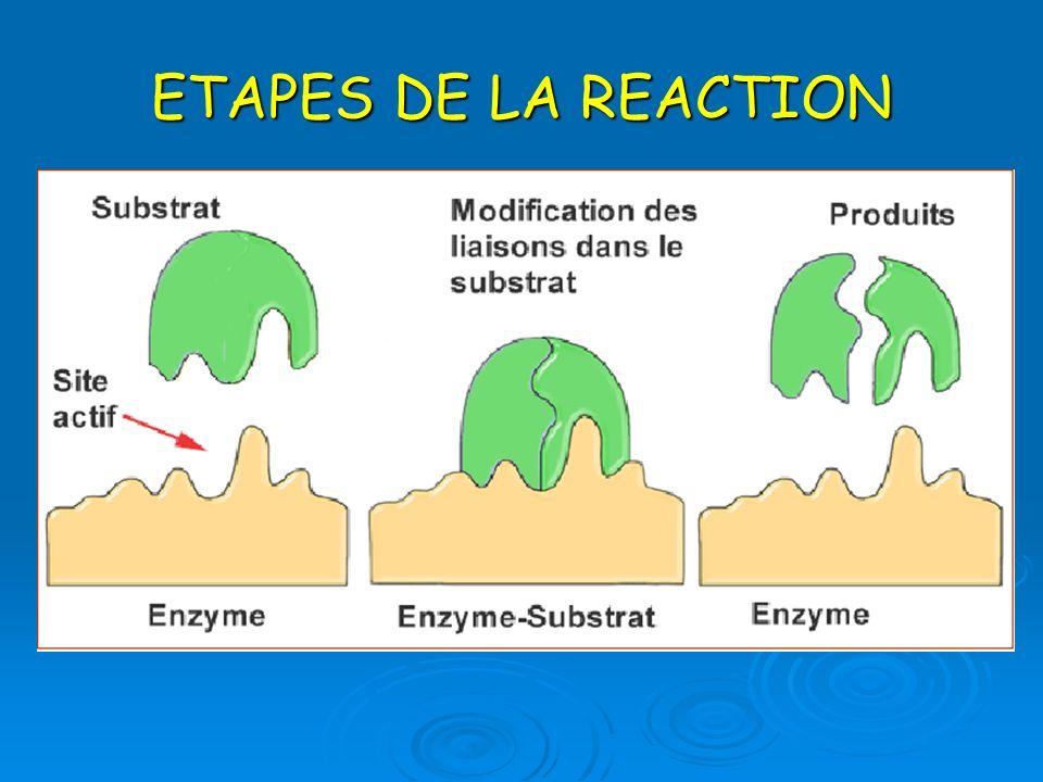 ETAPES DE LA REACTION