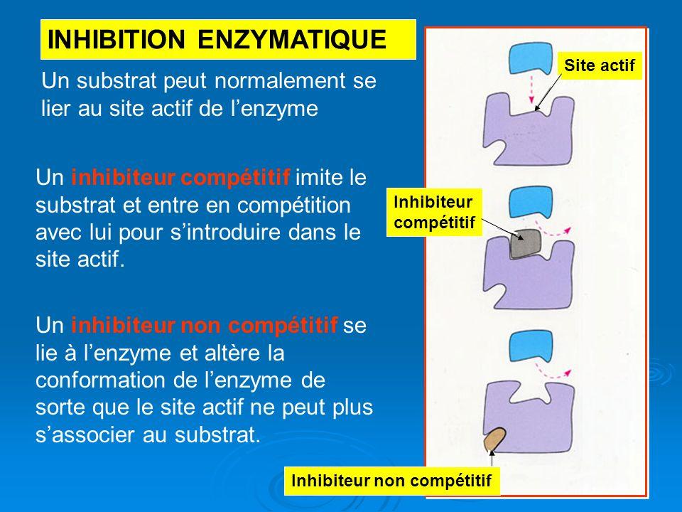 Un substrat peut normalement se lier au site actif de lenzyme Un inhibiteur compétitif imite le substrat et entre en compétition avec lui pour sintrod