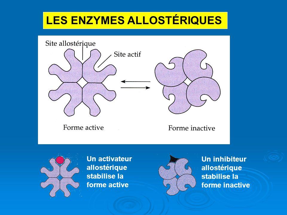 LES ENZYMES ALLOSTÉRIQUES Un activateur allostérique stabilise la forme active Un inhibiteur allostérique stabilise la forme inactive