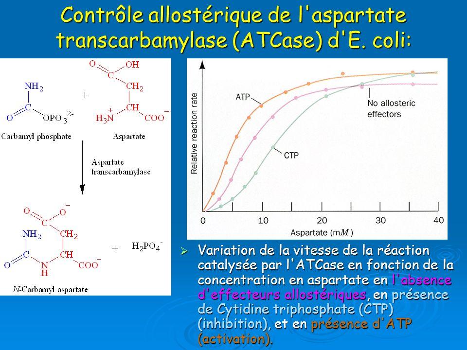 Contrôle allostérique de l'aspartate transcarbamylase (ATCase) d'E. coli: Variation de la vitesse de la réaction catalysée par l'ATCase en fonction de