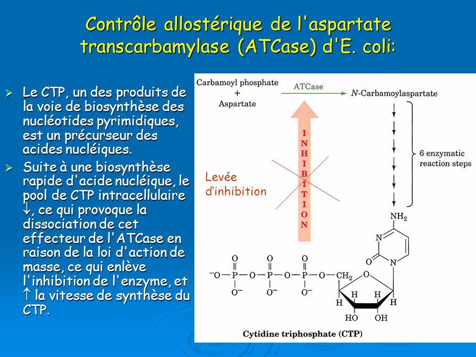 Contrôle allostérique de l'aspartate transcarbamylase (ATCase) d'E. coli: Le CTP, un des produits de la voie de biosynthèse des nucléotides pyrimidiqu
