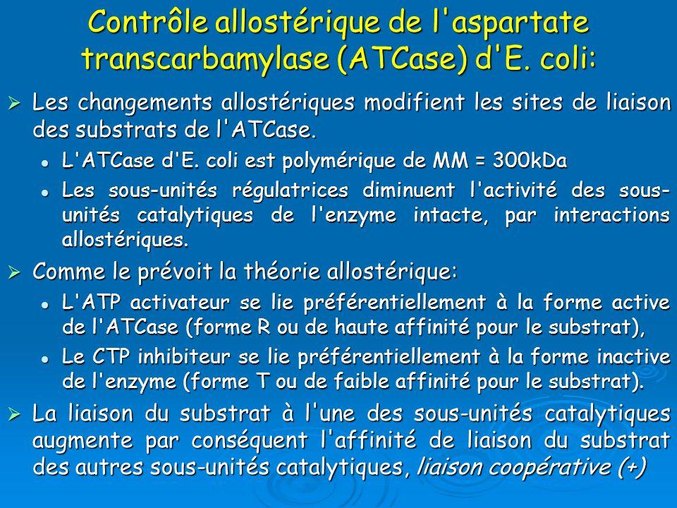 Les changements allostériques modifient les sites de liaison des substrats de l'ATCase. Les changements allostériques modifient les sites de liaison d