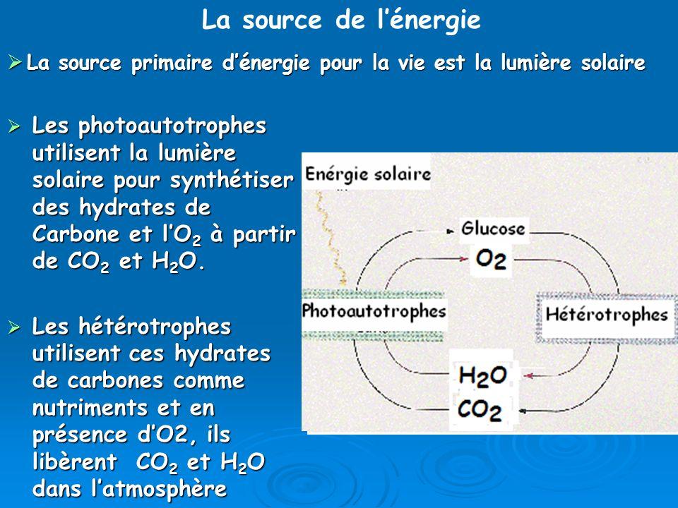 Les photoautotrophes utilisent la lumière solaire pour synthétiser des hydrates de Carbone et lO 2 à partir de CO 2 et H 2 O. Les photoautotrophes uti