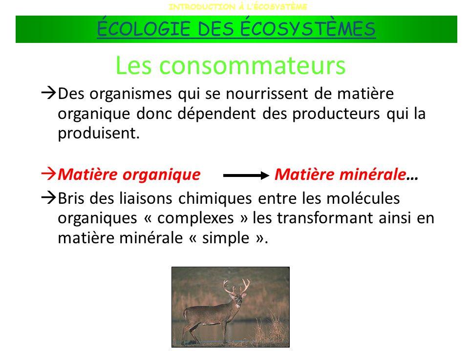 Les consommateurs Des organismes qui se nourrissent de matière organique donc dépendent des producteurs qui la produisent. Matière organiqueMatière mi