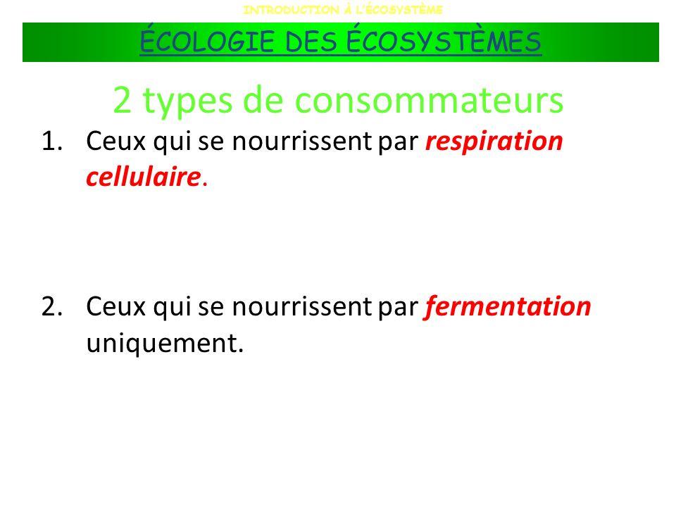 2 types de consommateurs 1.Ceux qui se nourrissent par respiration cellulaire. 2.Ceux qui se nourrissent par fermentation uniquement. INTRODUCTION À L