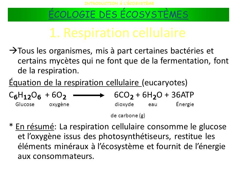 1. Respiration cellulaire Tous les organismes, mis à part certaines bactéries et certains mycètes qui ne font que de la fermentation, font de la respi