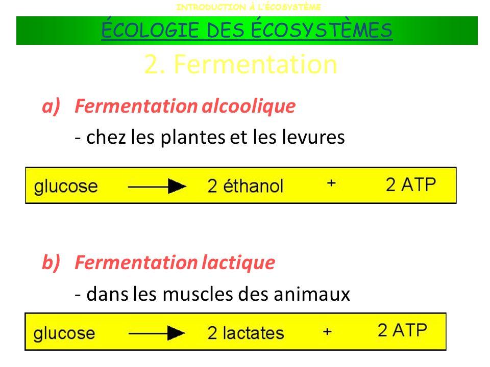 2. Fermentation a)Fermentation alcoolique - chez les plantes et les levures b)Fermentation lactique - dans les muscles des animaux INTRODUCTION À LÉCO