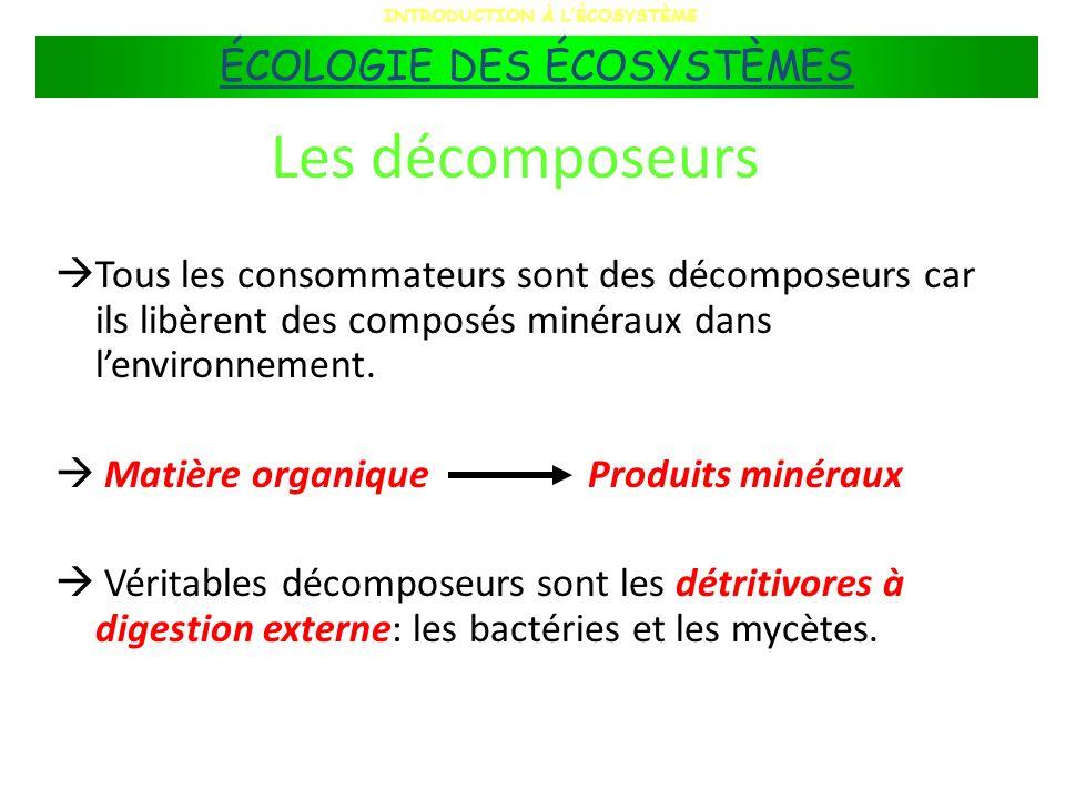 Les décomposeurs Tous les consommateurs sont des décomposeurs car ils libèrent des composés minéraux dans lenvironnement. Matière organiqueProduits mi