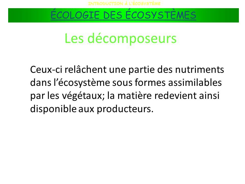Les décomposeurs Ceux-ci relâchent une partie des nutriments dans lécosystème sous formes assimilables par les végétaux; la matière redevient ainsi di
