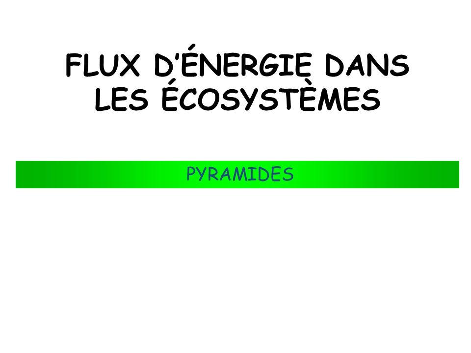 FLUX DÉNERGIE DANS LES ÉCOSYSTÈMES PYRAMIDES