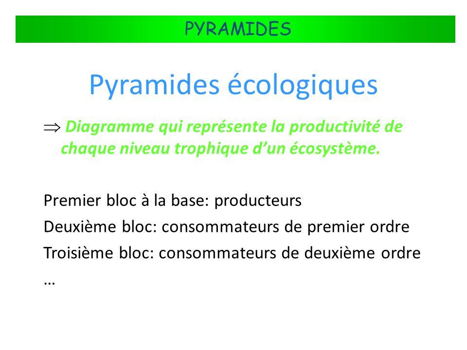 FLUX DÉNERGIE DANS LES ÉCOSYSTÈMES PYRAMIDES Pyramides écologiques Diagramme qui représente la productivité de chaque niveau trophique dun écosystème.