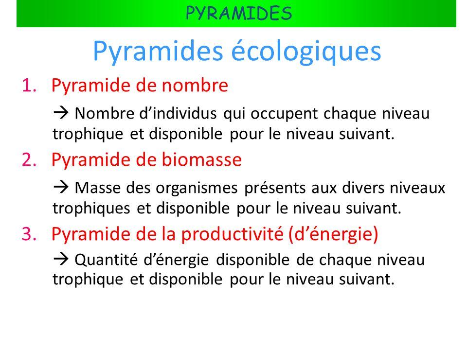 FLUX DÉNERGIE DANS LES ÉCOSYSTÈMES PYRAMIDES Pyramides écologiques 1. Pyramide de nombre Nombre dindividus qui occupent chaque niveau trophique et dis