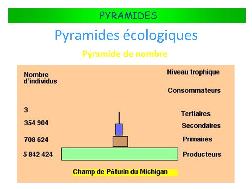 FLUX DÉNERGIE DANS LES ÉCOSYSTÈMES PYRAMIDES Pyramides écologiques Pyramide de nombre