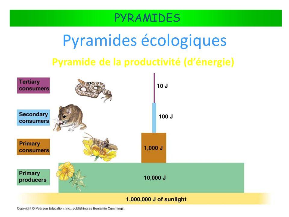 FLUX DÉNERGIE DANS LES ÉCOSYSTÈMES PYRAMIDES Pyramides écologiques Pyramide de la productivité (dénergie)