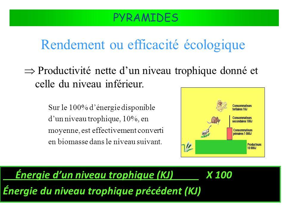FLUX DÉNERGIE DANS LES ÉCOSYSTÈMES PYRAMIDES Rendement ou efficacité écologique Énergie dun niveau trophique (KJ) X 100 Énergie du niveau trophique pr