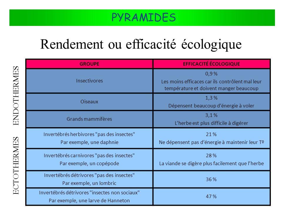 FLUX DÉNERGIE DANS LES ÉCOSYSTÈMES PYRAMIDES Rendement ou efficacité écologique GROUPEEFFICACITÉ ÉCOLOGIQUE Insectivores 0,9 % Les moins efficaces car