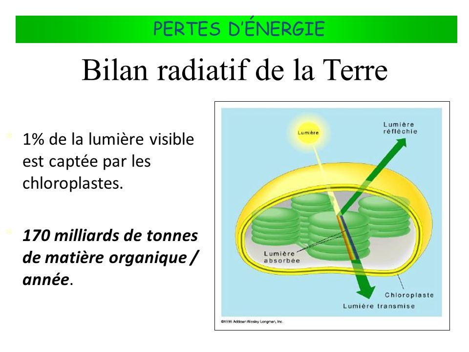 FLUX DÉNERGIE DANS LES ÉCOSYSTÈMES PERTES DÉNERGIE * 1% de la lumière visible est captée par les chloroplastes. * 170 milliards de tonnes de matière o