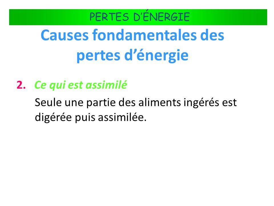 FLUX DÉNERGIE DANS LES ÉCOSYSTÈMES PERTES DÉNERGIE Causes fondamentales des pertes dénergie 2. Ce qui est assimilé Seule une partie des aliments ingér