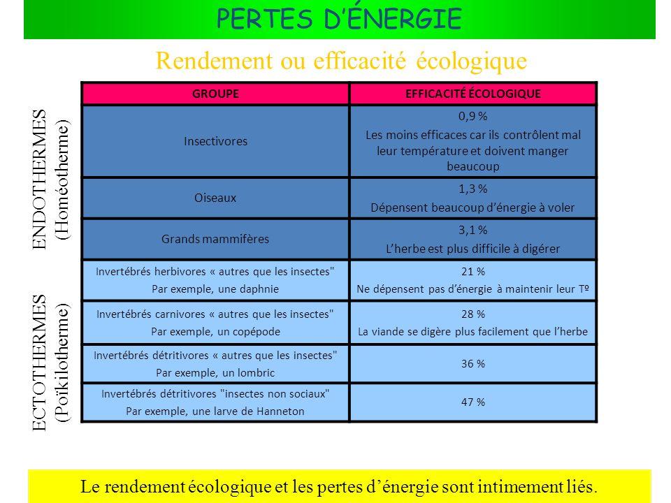 FLUX DÉNERGIE DANS LES ÉCOSYSTÈMES PERTES DÉNERGIE GROUPEEFFICACITÉ ÉCOLOGIQUE Insectivores 0,9 % Les moins efficaces car ils contrôlent mal leur temp