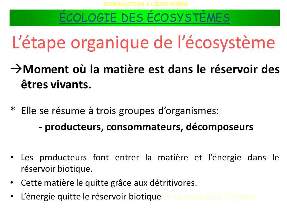 Les décomposeurs Tous les consommateurs sont des décomposeurs car ils libèrent des composés minéraux dans lenvironnement.