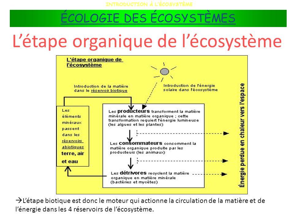 Létape organique de lécosystème Létape biotique est donc le moteur qui actionne la circulation de la matière et de lénergie dans les 4 réservoirs de l