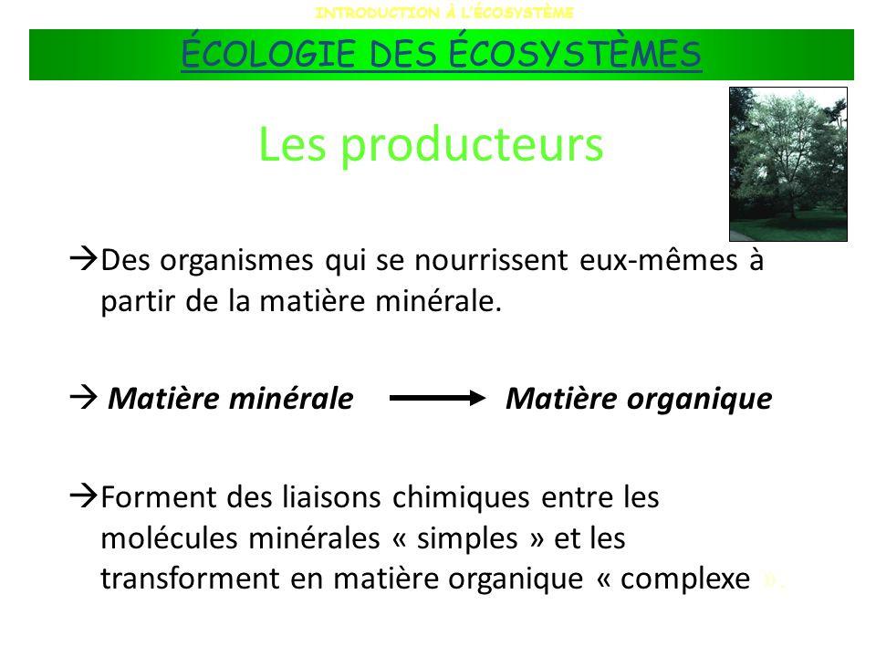 Les décomposeurs Ceux-ci relâchent une partie des nutriments dans lécosystème sous formes assimilables par les végétaux; la matière redevient ainsi disponible aux producteurs.