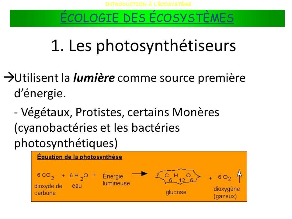1. Les photosynthétiseurs Utilisent la lumière comme source première dénergie. - Végétaux, Protistes, certains Monères (cyanobactéries et les bactérie