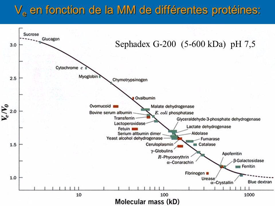 V e en fonction de la MM de différentes protéines: Sephadex G-200 (5-600 kDa) pH 7,5